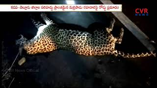 Unknown Vehicle hits Leopard | Kurnool District | CVR News - CVRNEWSOFFICIAL
