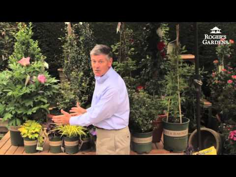 New Gardening Tips with Nicholas Staddon