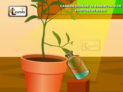 Carbon dioxide is essential for Photosynthesis proved with simple experiment - Science