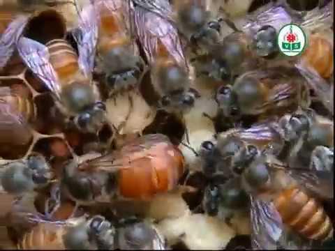 Beekeeping (Kannada)