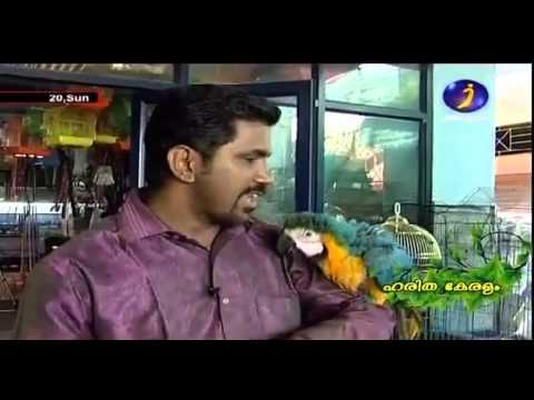 Documentary on Ornamental fishes, Exotic Birds and Fancy Pigeons Part 1