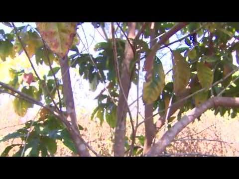 Projeto de reflorestamento na Amazônia - parte 1