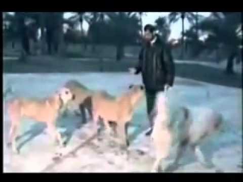 عدي صدام حسين يطعم اسوده نادر