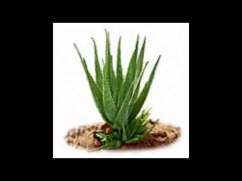 Jugos de Aloe Vera para bajar de peso
