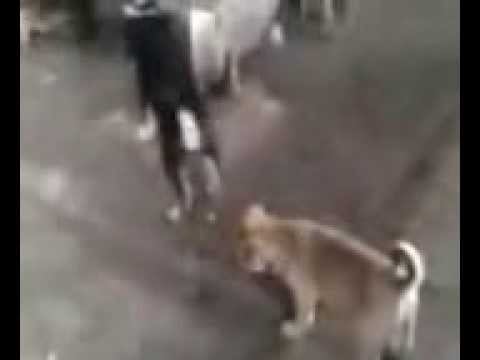 THREE PUPPY PLAYING ON RLY PLATFORM