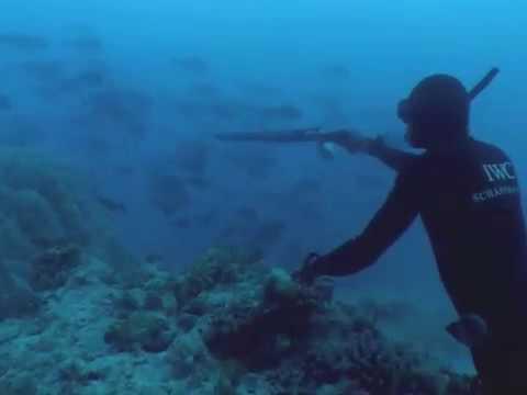 Фридайвер – человек – дельфин…