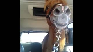 Horse Passenger