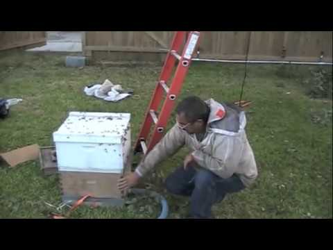 Beekeepers Remove Giant External Bee Hive! (Live Bee Rescue)