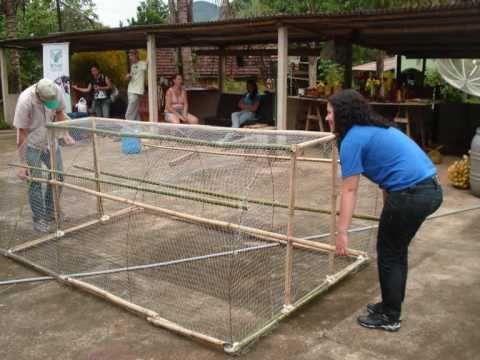 Galinheiro móvel  (chicken tractor)