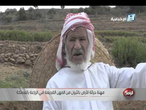 العم سعيد.. مزارع لازال يحرث مزرعته بالطريقة التقليدية