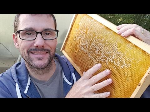 🔴 Daddykirbs Live  - Beekeeping Creator - E1708