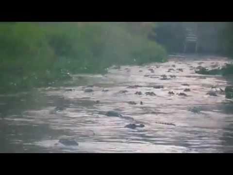 แม่น้ำแห่งจรเข้