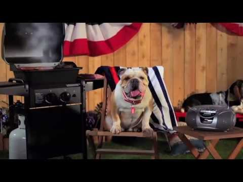 See Tag and his friends enjoying the dog days of summer in this Mattress Discounters Commercial promoting their 4th of July Sale. Coming soon: Behind the scenes footage of how Jones Advertising directed 8 dogs at once to make it!