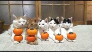 Замечательные Дрессированные Кошечки и Коты.
