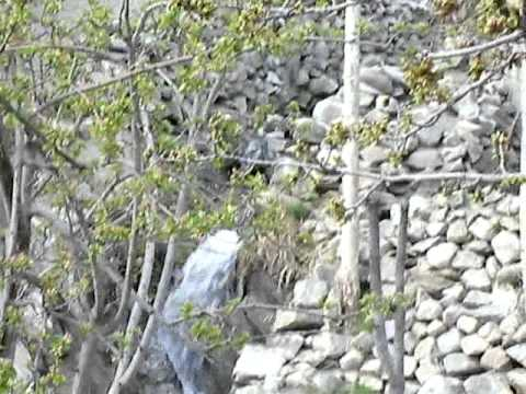 Spring in Hunza Karimabad April 13, 2014 III
