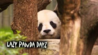 Royalty Free :Lazy Panda Dayz