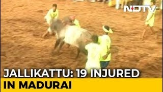 19 Injured At Jallikattu Event In Tamil Nadu. 1,000 Bulls At Mega Fest - NDTV