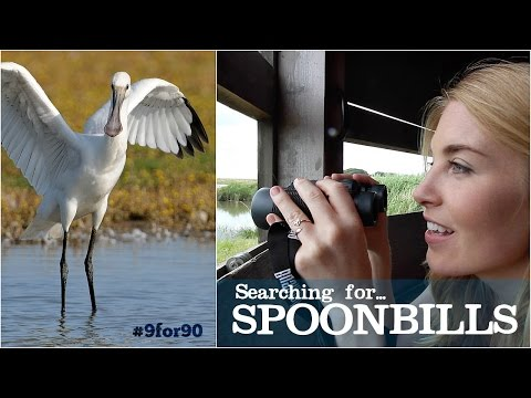 Searching for SPOONBILLS | Maddie Moate