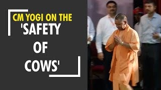 Deshhit: CM Yogi once again stressed on the 'safety of cows' - ZEENEWS