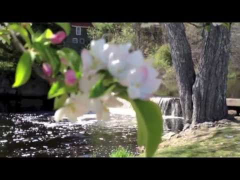 NH Real Estate Market and Apple Blossoms