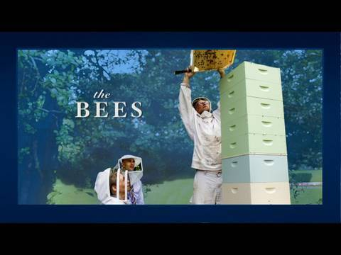 Inside The White House - Bees!