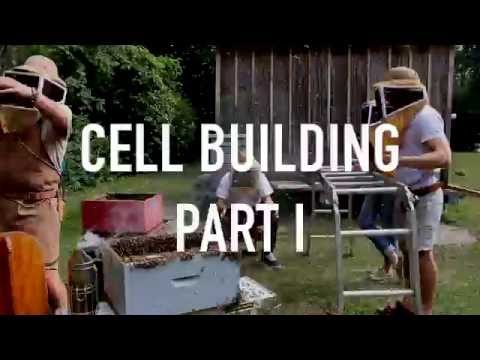 Cell Building Part I