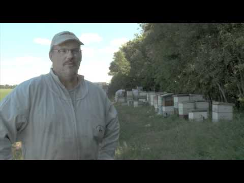 CESO Beekeeping Reverse Assignment