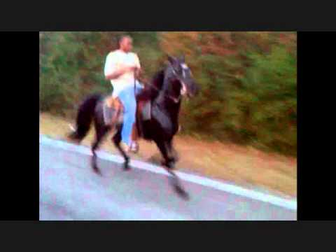 the horse black... very fast single footer.wmv