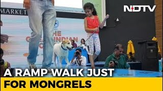 Mongrels Walk The Ramp In Chennai, Over 100 Dogs Compete For 28 Titles - NDTV