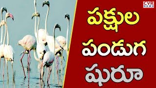 Flamingo Festival 2019 | Minister Somireddy Chandramohan Reddy Launches Flamingo Festival | Nellore - CVRNEWSOFFICIAL