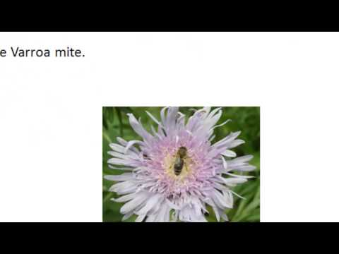 Hobbyist Beekeeping - Lesson 1: Honey Bees