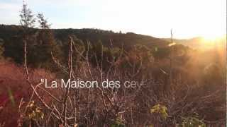 La MAISON DES CEVENNES -Yoda et Waska having fun in winter time-