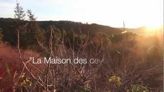 La MAISON DES CEVENNES -Yoda et Waska having fun in winter time-