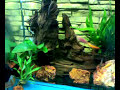 Cichlid fsh tank / open bottom