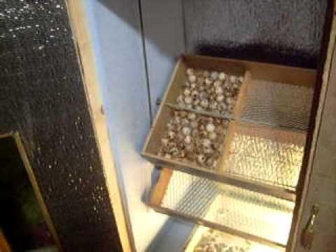 Механический переворот яиц для инкубатора своими руками