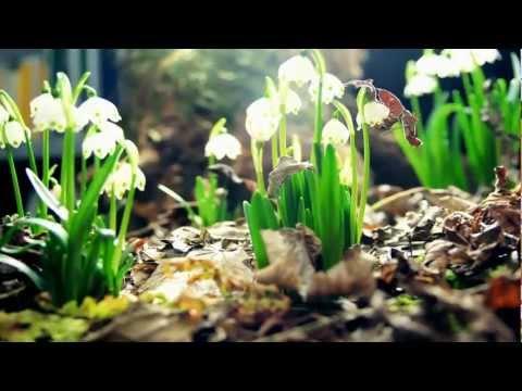 Amazing Nature full HD 1080p