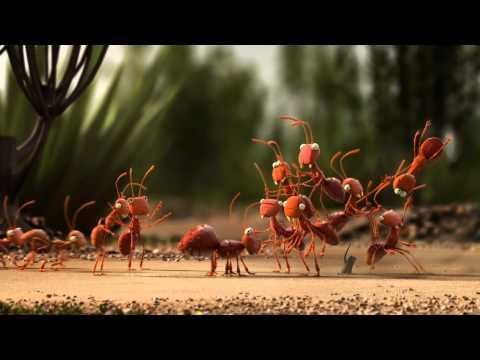 De Lijn - Mieren - ENG