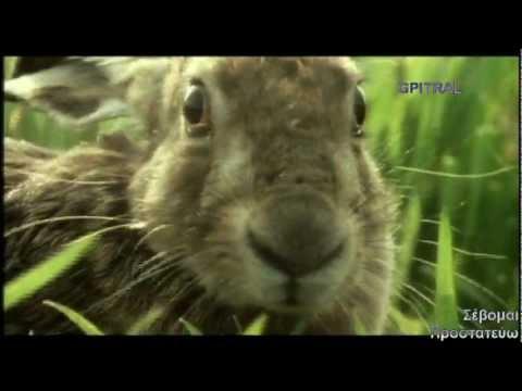 ο λαγός the rabbit the hare