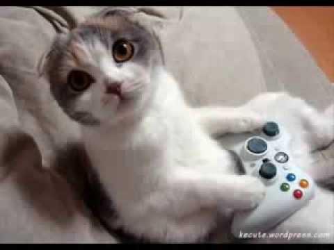 Funny cats - gatos em videos engraçados da internet