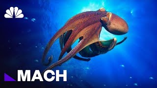 Is The Octopus An Alien? | Mach | NBC News - NBCNEWS