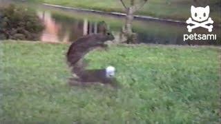ארנבים קופצים