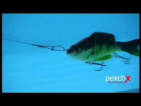 Swimbait AGAT Perch X test in water