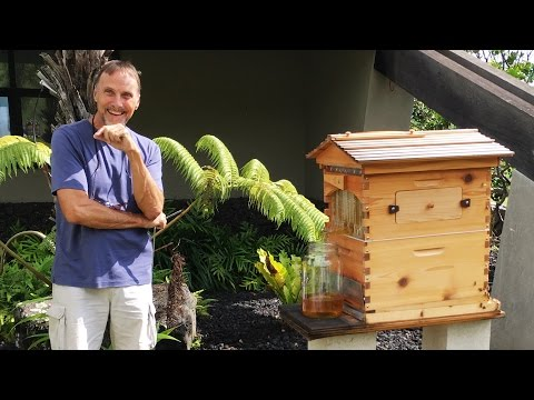Flow hive honey harvesting on a self sufficient ranch in Hawaii