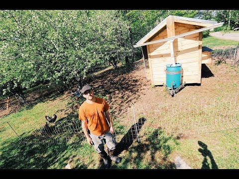Chickens Restore This Abandoned Orchard