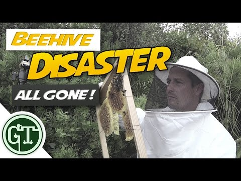 Beehive Disaster - ALL GONE !! | Journey to Beekeeping