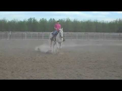 Nudie Appaloosa Gelding Flying Lead Change