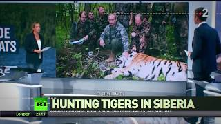 'How to lose credibility in 2min': Assume Putin hunts tigers in Siberia - RUSSIATODAY