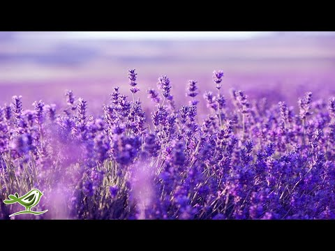 Relaxing Harp Music: Sleep Music, Stress Relief, Meditation Music, Spa Music, Background Music ★53