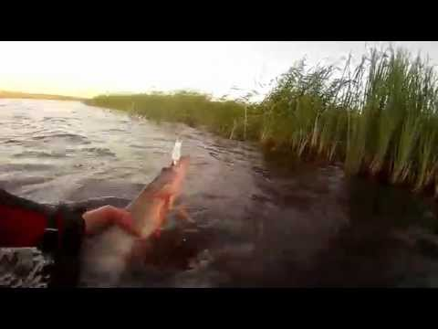 ловля щуки мепсом циклопом видео