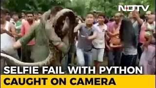 Selfies With A Python Nearly Costs Bengal Forest Ranger His Life - NDTV